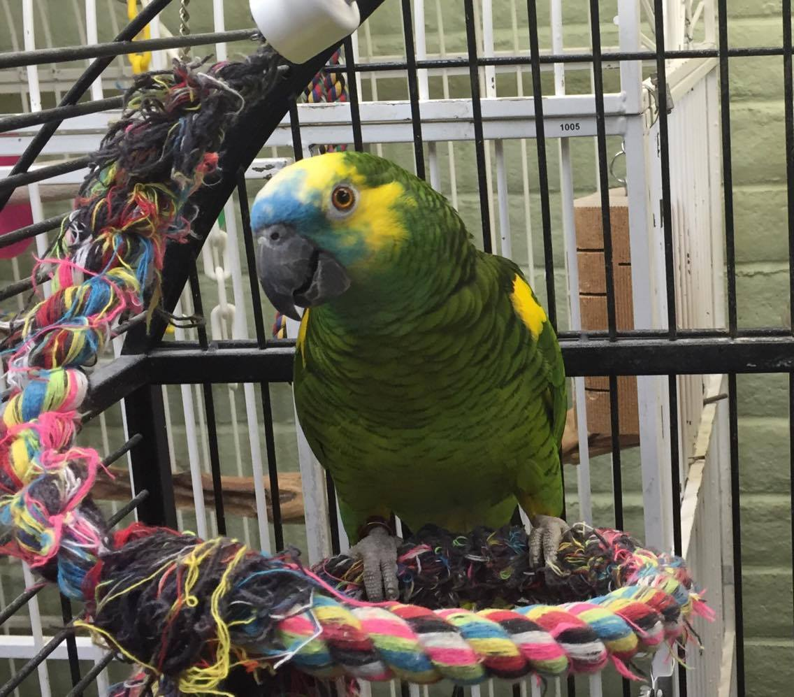 Port Orchard Parrot Rescue and Sanctuary