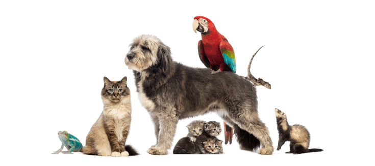 birds cats dogs plus - New Suppliers!  New Products!