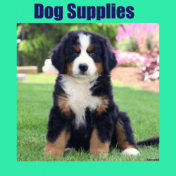 cat dog supplies 250x250 - Home