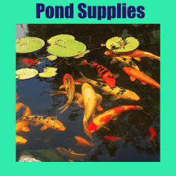 cat pond supplies 250x250 - Home