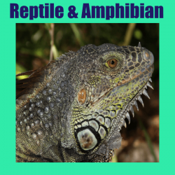 Reptile & Amphibian Supplies