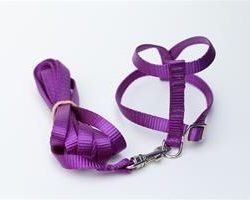 the kaylor collar bird harness by fred bird company 250x200 - The Kaylor Collar Bird Harness by Fred Bird & Company