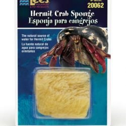 Lee's Hermit Crab Sponge