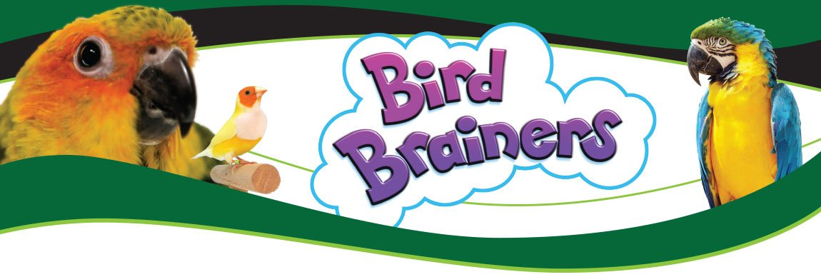 Bird Brainers Parrot Ladder