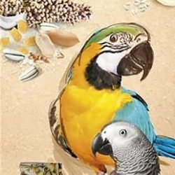 A&E Cage Company Smakers Parrot MAXI Nut/Coconut Treat Sticks (2 count)
